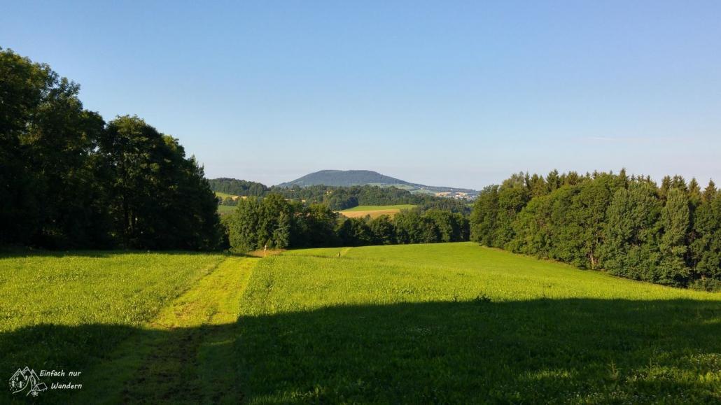 Blick auf den Buchenberg bei strahlend blauem Himmel.