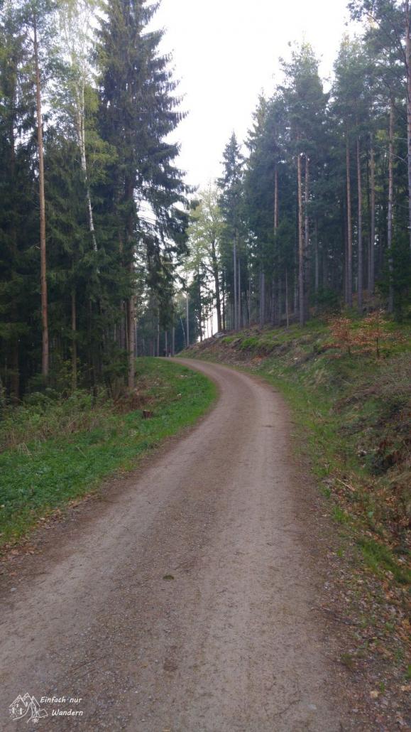 Unser Wanderfruehling beginnt mit einem Anstieg in den Wald hinein.