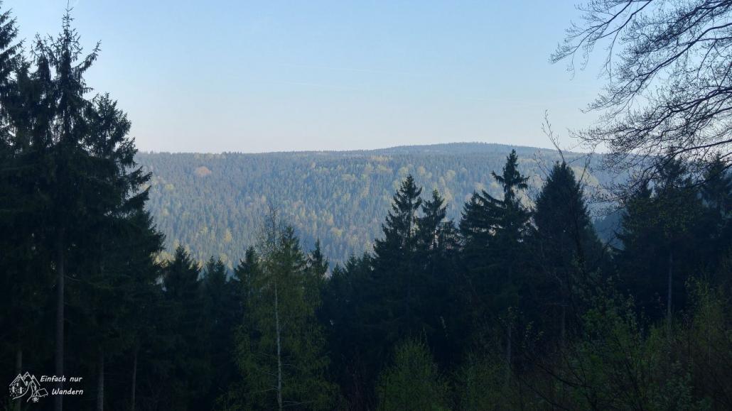 Die Sonne kommt heraus und scheint über den Wald.