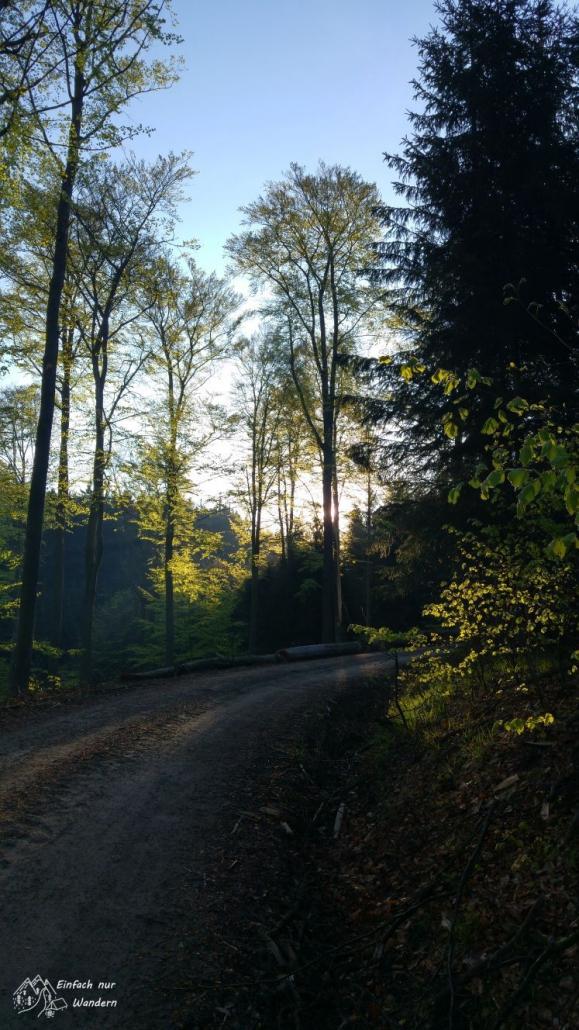 Die Sonne blinzelt durch die Bäume.