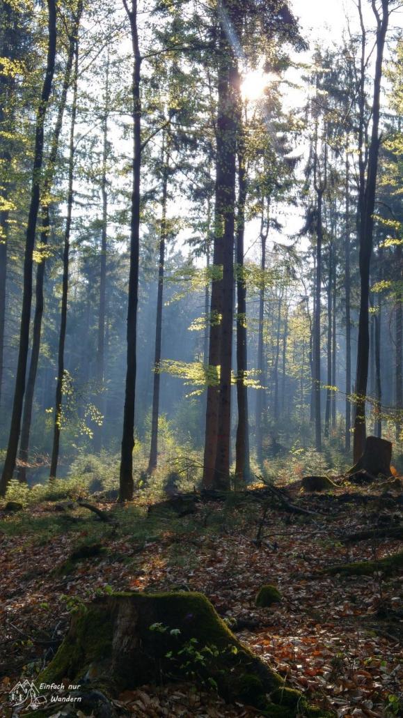 Frühlingsstimmung im Wald sobald die Sonne durch die Bäume scheint.