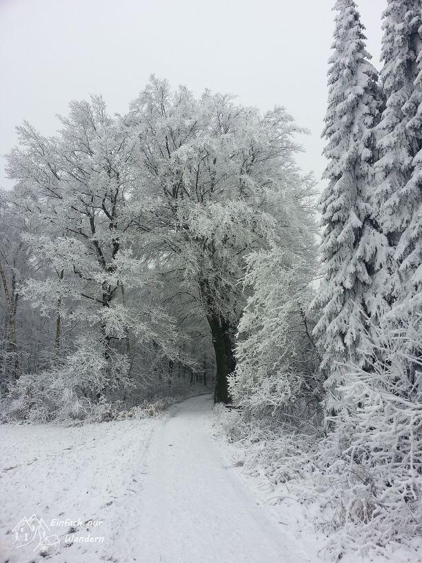 Ausleben der Wanderlust auch im Winter.