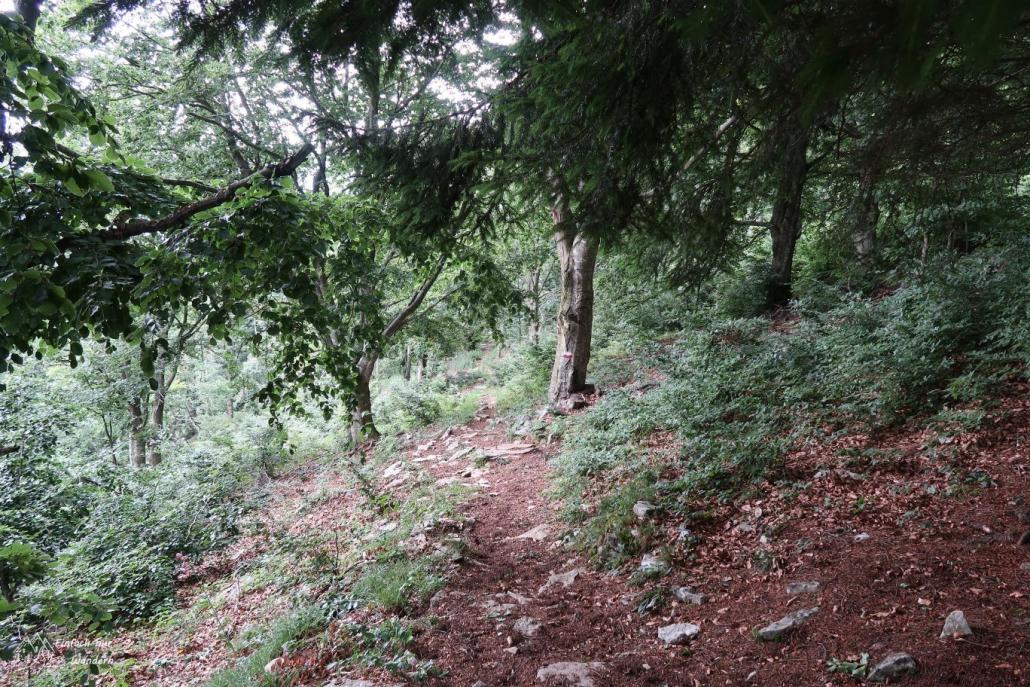 Der Abstieg in Richtung Prada schlängelt sich durch Wälder.