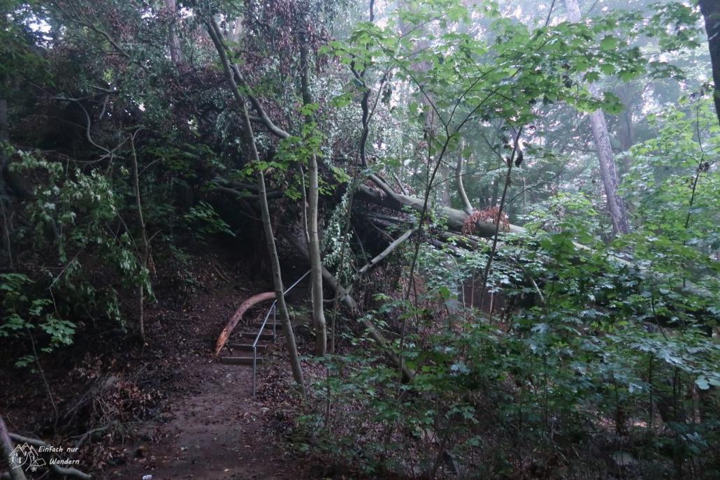 Der Zugang zum Raubschloss an der Talsperre Kriebstein ist durch umgestürzte Bäume blockiert.