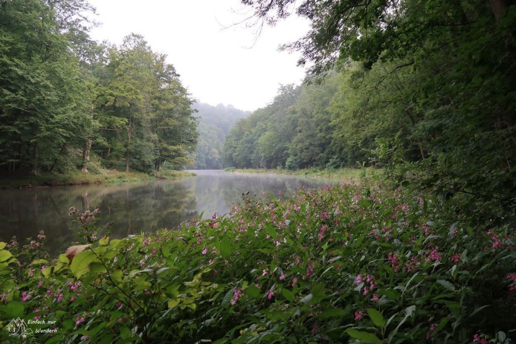 Die Zwickauer Mulde fließt zwischen Bäumen hindurch.
