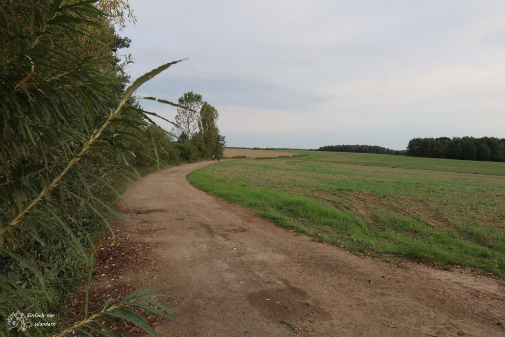 Ein Feldweg bei Burgstaedt führt an Feldern Stadtauswärts.
