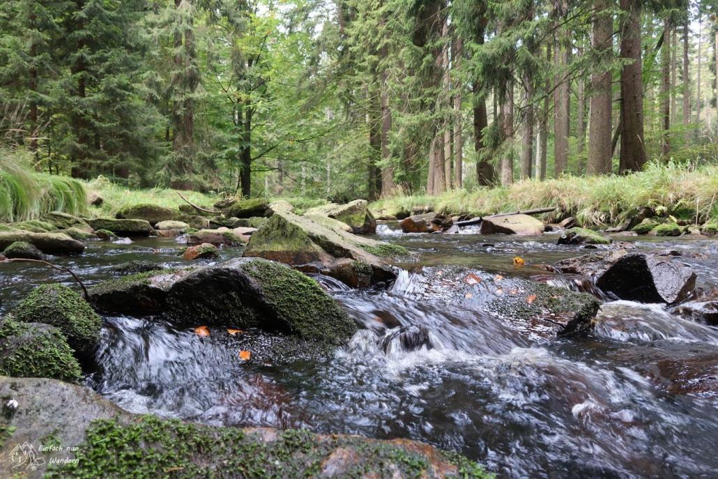 Die Schwarze Pockau im Schwarzwassertal fliesst plätschernd über Steine hinweg.