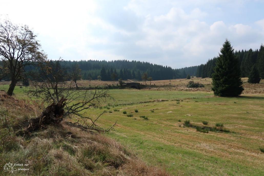 Am Wendepunkt der Wanderung sehen wir eine Graslandschaft.