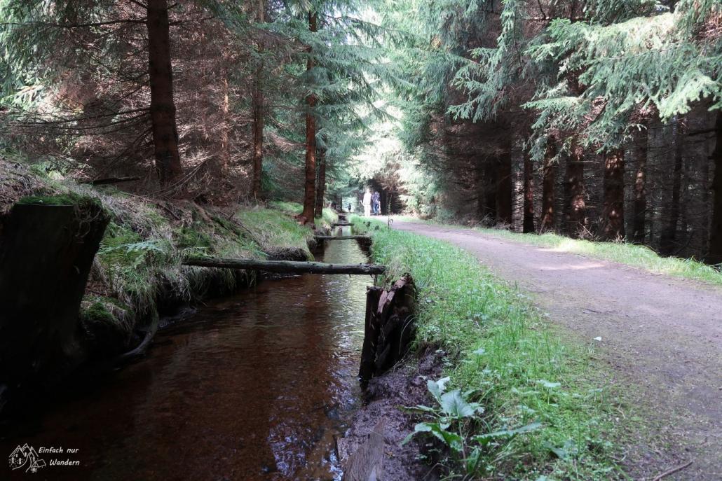Der Gruene Graben ist ein Wasserlauf der dem Weg im Wald folgt.