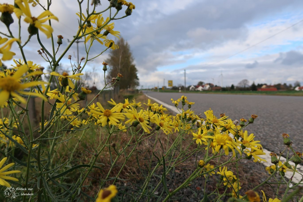 Am Straßenrand blühen gelbe Blumen.