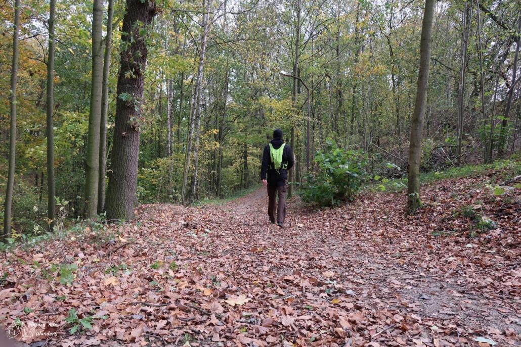 Ich laufe auf einem Waldweg mit viel Laub entlang.