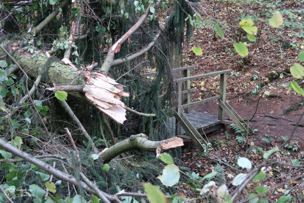 Sturmschäden entlang des Weges wie hier ein geborstener Baumstamm.