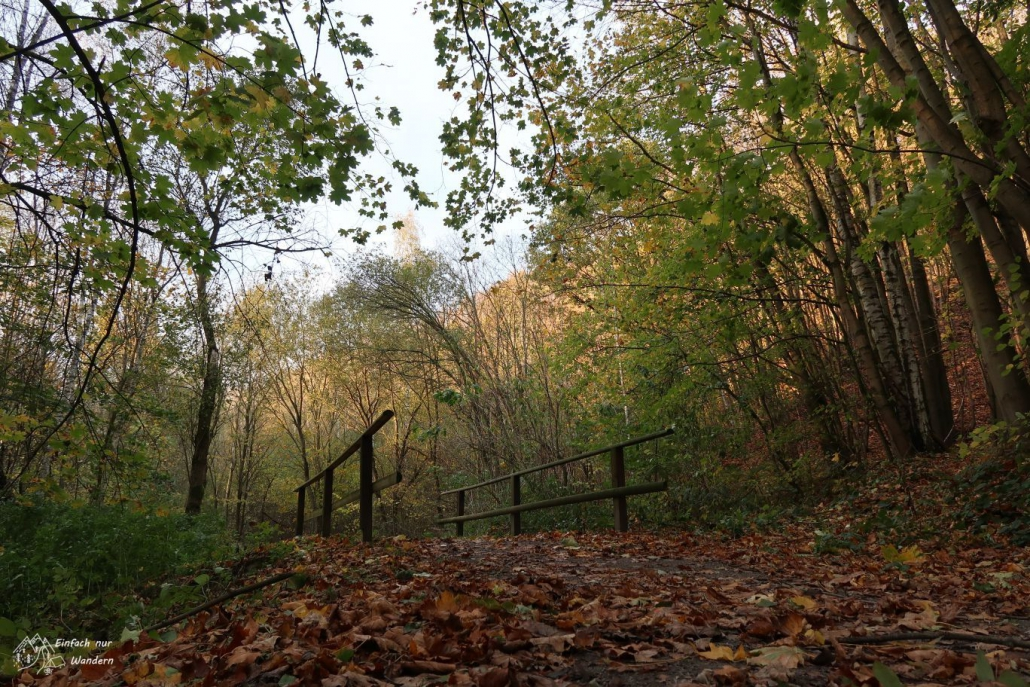 Rotes Laub liegt vor der Brücke im Leitenholz.