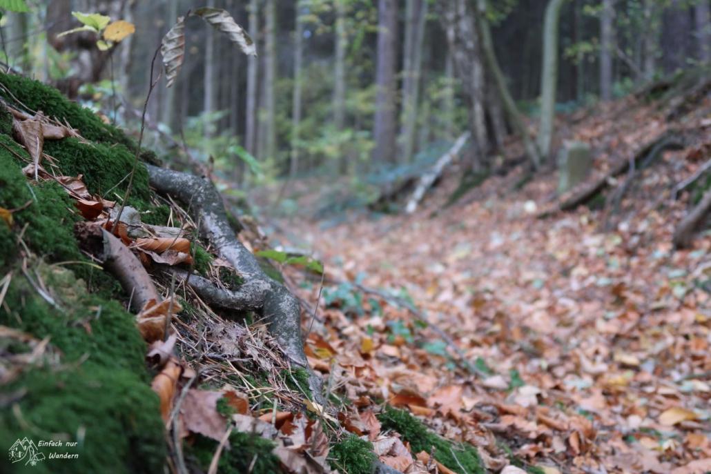 Wurzeln und viel Laub sind im Wald zu sehen.