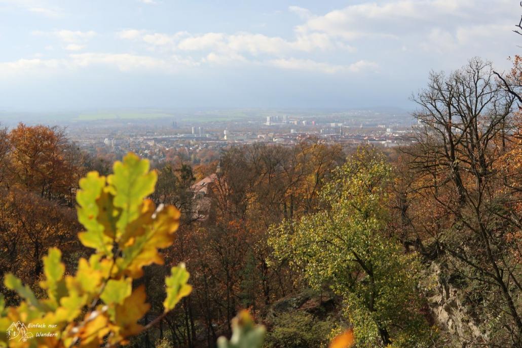 Schöner Blick über Bäume in Richtung Dresden.
