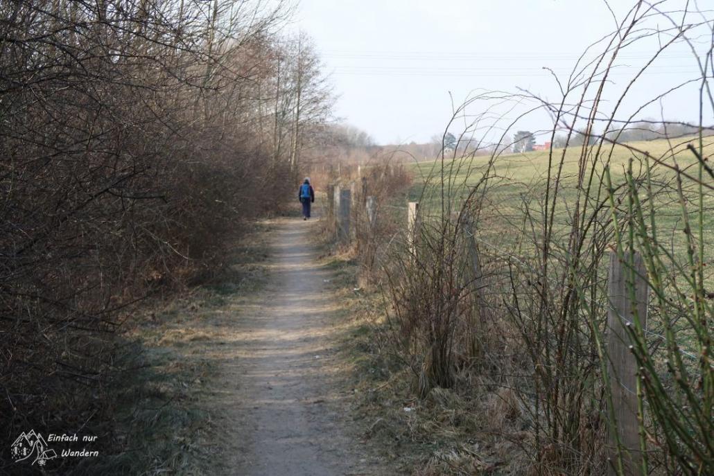 Ein Weg auf der 15.Gorbitzer Frühlingswanderung mit Feld und Hecke.