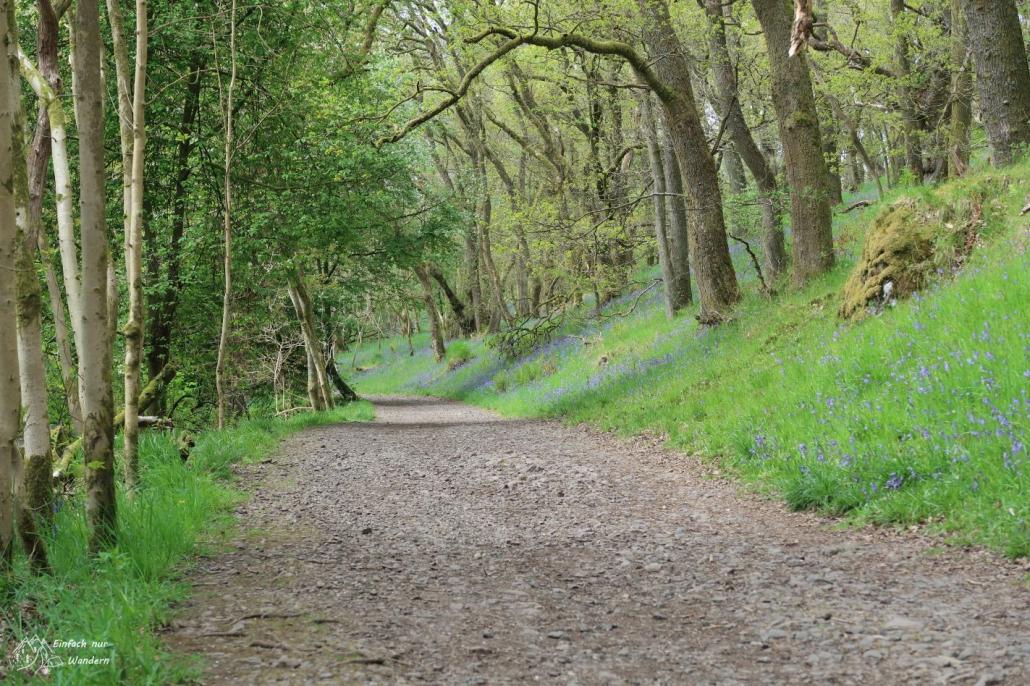 Ein angenehmer Weg führt mich hinaus aus Milngavie. Saftiges Grün überall.