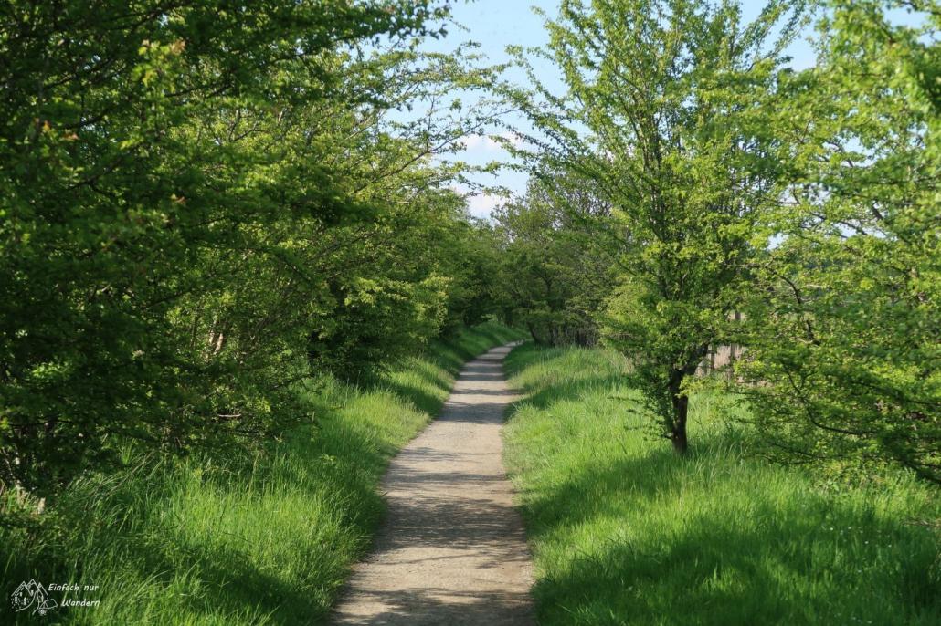 Der West Highland Way verläuft hier auf einem altem Bahndamm.