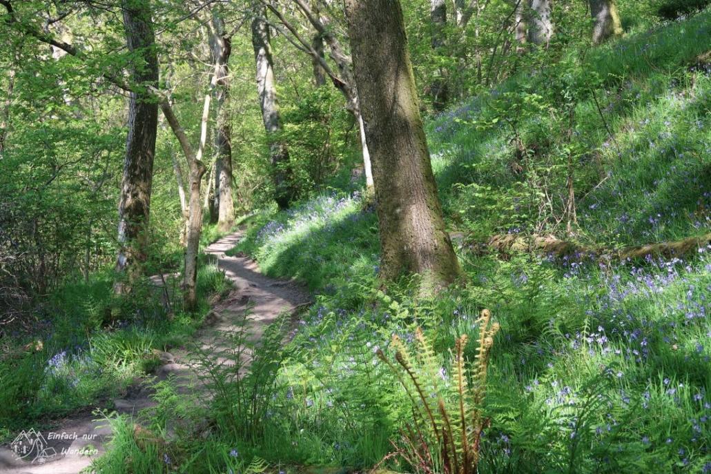 Der West Highland Way präsentiert sich herrlich frühlingshaft.