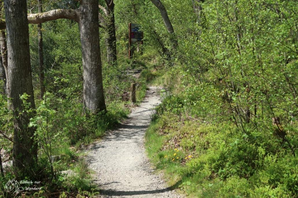 Der West Highland Way folgt dem Ufer durch viel Wald.