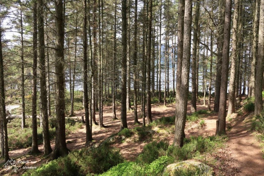 Nach einem kleinem Abstieg erreiche ich den Wald der eigentlicher Permitarea.