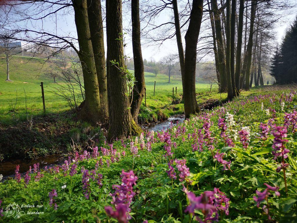 Der Frühling erwacht so langsam in Leisnig.