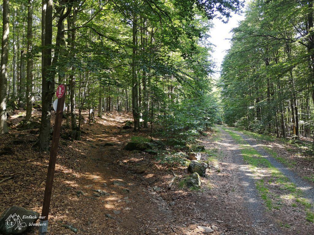 Der kleinere Cerchovsteig kreuzt ab und an breitere Waldwege.