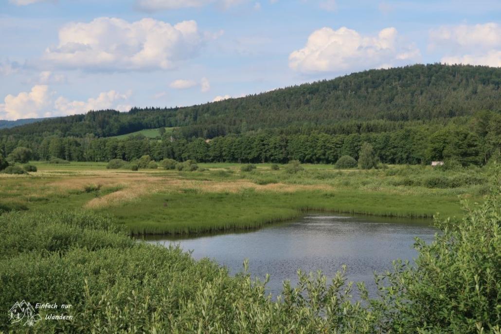Blick ins Feuchtgebiet des Schwarzbach