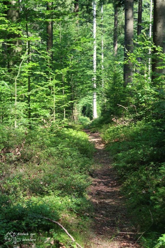 Ein Wanderweg im grünen Wald