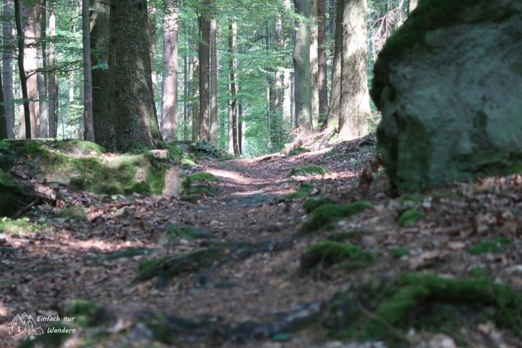 Waldweg mit Wurzeln und Steinen