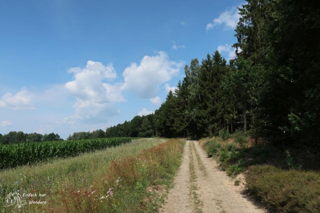 Der Wanderweg führt nun am Waldrand entlang.