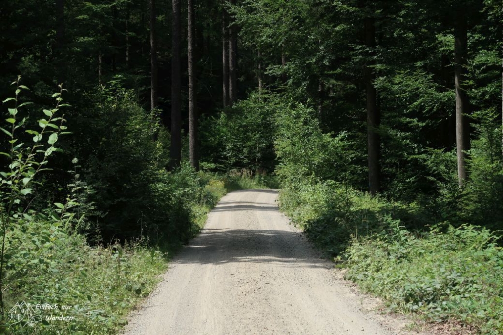 Ein breiter Waldweg.